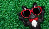 Dog in love on grass — Stock Photo
