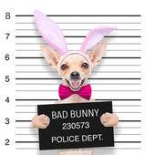 Easter mugshot dog — Stock Photo