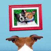 Dog in love — Stock Photo