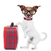Hond met Bagage — Stockfoto