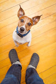 Dog begging — Stock Photo