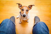 Dog begging — Stock Photo