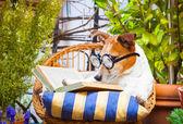 Dog reading a book — Stock Photo