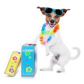 Summer vacation dog — Stock Photo