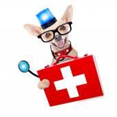 緊急医師犬 — ストック写真
