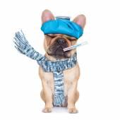 SICK ILL DOG — Stock Photo