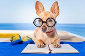 Dog reading — Stock Photo