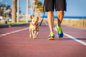 Dog and owner walking — Stock Photo