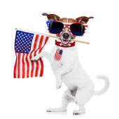 Dog 4th of july — Stock Photo