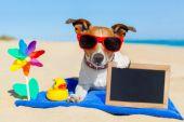 Dog at the beach — Stock Photo