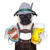Bavarian german pug dog — Stock Photo