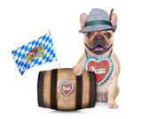 Bavarian german pug dog — Stock Photo