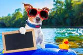 Beach summer dog — Stock Photo