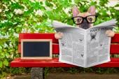 Dog reading newspaper — Stock Photo