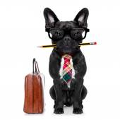 Office worker dog — Stock Photo
