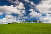 Árvores solitárias em um campo de golfe vazio — Fotografia Stock