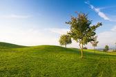 туманное утро на гольф поле пустым — Стоковое фото