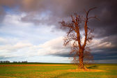 Memorial tree on the empty field before heavy storm  — Stock Photo