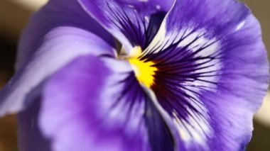 Closeup shot of flowers — Stock Video