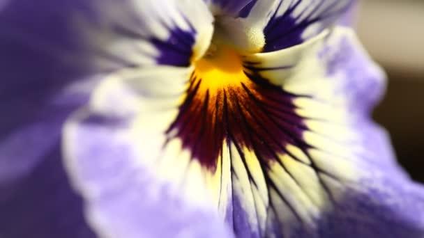 Closeup foto de flores — Vídeo de stock