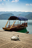 Swan on a pier on Lake Bled — Stock Photo