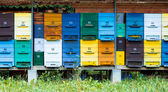 Colorful hives — Stock Photo