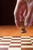 šachy knight — Stock fotografie