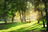 Sunny day in the park — Stock Photo