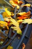 Hojas de otoño amarillo en el coche — Foto de Stock