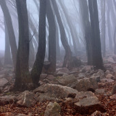 Mist in the forest — Stock Photo