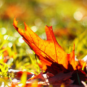 Leaf on the grass — Stock Photo