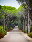 Road through a pine forest — Stock Photo