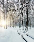 Promienie słońca, Świt zima w lesie — Zdjęcie stockowe