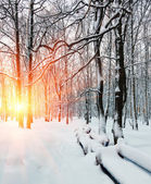 Sun's rays, winter dawn in the forest — Stock Photo