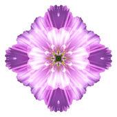 Flower mandala isolated on white background — Stock Photo