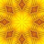 Concentric Flower Center Macro Close-up. Mandala Kaleidoscopic design — Stock Photo