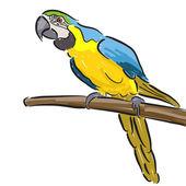 Macaw — Stock Vector