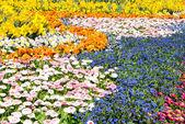 Gorgeous spring flowers — Stock Photo