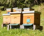 Beekeeping — Stock Photo