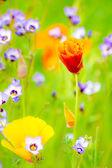 Flowering Summer Medow — Stock Photo