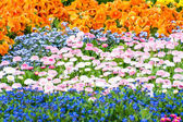 Gorgeous Flower Bed — Stock Photo