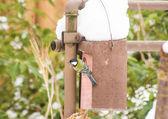 Blu Tit Bird at a Nest Box — Stock Photo