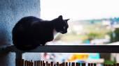 Cat on the balcony — Stock Photo
