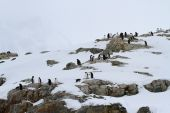 Small colony of Gentoo penguins on the rocks of the Antarctic Is — Stock Photo