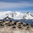 Adelie penguin colony on the rocks on the background of mountain — Stock Photo #54297945