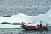 Red powerboat near ice floes with crabeater seal — Foto de Stock