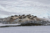 Small colony of Adelie penguins among the rocks and snow on the  — Stock Photo
