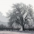 Trees in winter at dusk covered in snow — Stock Photo #65669777