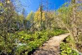 Plitvice lakes national park paradise walkway — Stock Photo