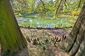 Plants, trees and lake of Zagreb botanical garden — Stock Photo